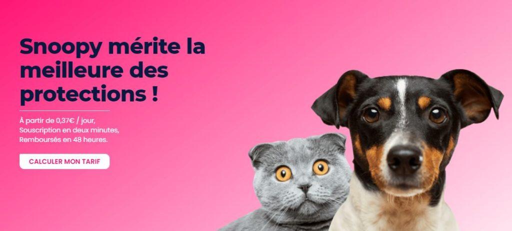 ペット保険業界のDXに挑戦!仏スタートアップinjoye